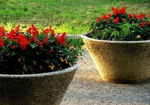 plantio da alegria de jardim