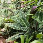 Soluções para Jardins Internos sem Sol