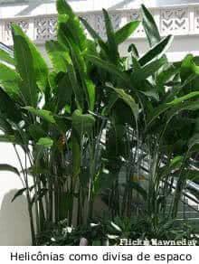 herbaeas-verao