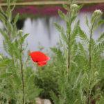 Plantas para Lugares Úmidos