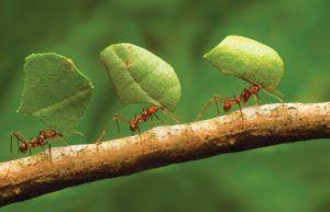 Formigas Cortadeiras: Como Prevenir o Ataque