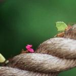Formigas Cortadeiras – Formas de controle biológico, orgânico e venenos quimicos