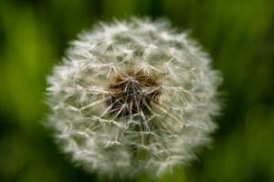 Tratamento de Alergias, como se realiza o processo alergico