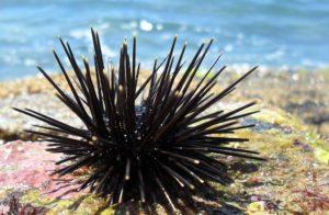 Como Tratar Ataques de Seres Marinhos em Praias