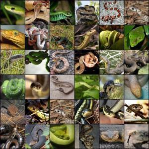 Cobras: tipos e como capturar uma serpente?