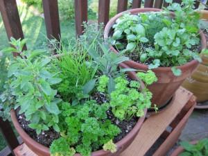 Dicas para plantar ervas em seu apartamento