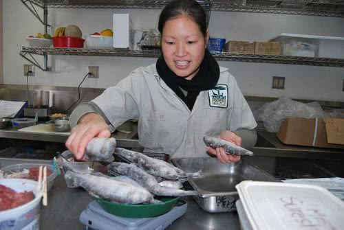 descongelamento-peixe