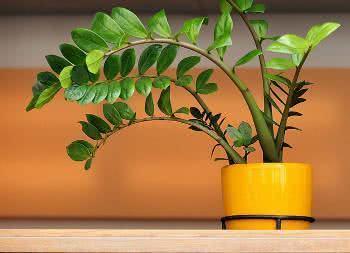 plantas para jardim interno
