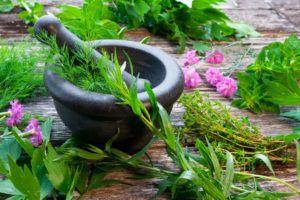 Como Usar os Principais Extratos Herbais e Minerais