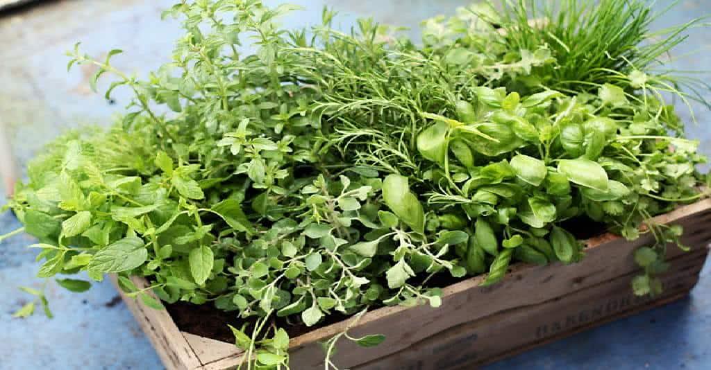 Como fazer uma horta caseira fazf cil for Cultivo de verduras en casa