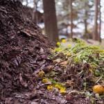 Compostagem em Jardins ou Sítios: Como Fazer