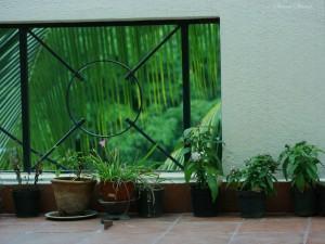 Plantas para sua varanda ou sacada