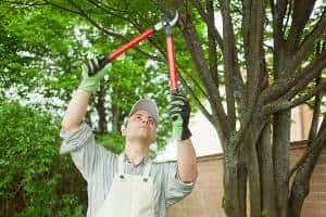 jardineiro-poda-arvore