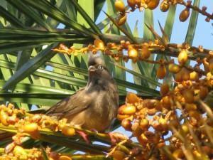 Pássaro na palmeira