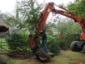Como transplantar árvores ou palmeiras