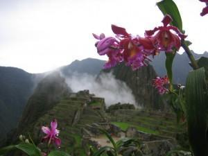 Orquídea Sobralia