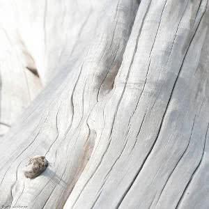 clareamento da madeira