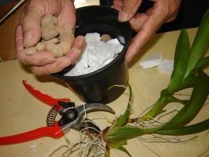 Adicionando argila expandida ao vaso