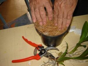 Colocando Fibra de Côco no vaso