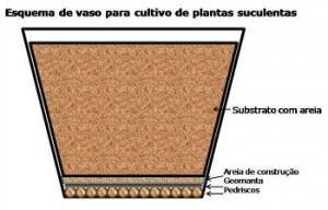 suculentas em vaso