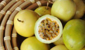 Pé de Maracujá (Passifloraalata L.)