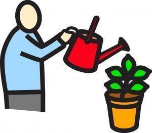 Calendario de cuidados com as plantas conforme as estações.