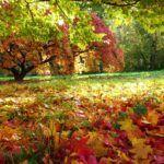 Cuidados com as Plantas Durante o Outono