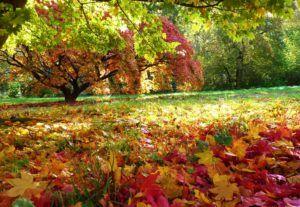 Resultado de imagem para jardim no outono