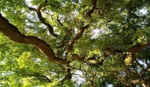 Como Escolher e Plantar Árvores no seu Jardim?
