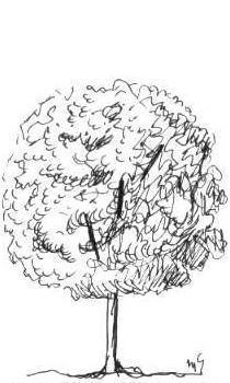 árvore com forma esférica