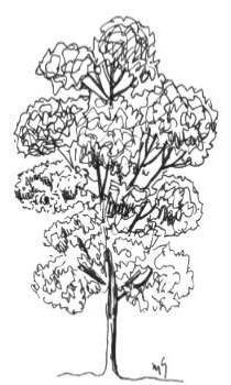 árvore com forma irregular
