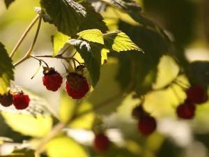 Árvores frutíferas, como plantar, as exigencias do solo?