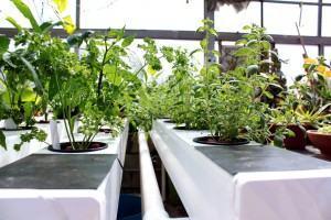 Hidroponia ou Cultivo em Solo? Qual Escolher
