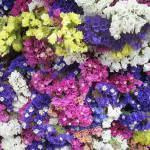 Secagem de flores – buques. Pétalas de flores desidratadas!