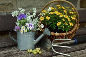 Manutenção Preventiva de Pragas em Jardins