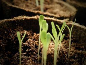 Sementeiras para Horta com Materiais Reciclados