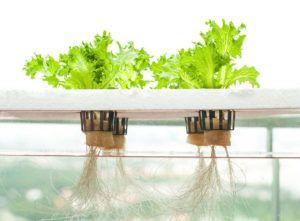 Horta Hidropônica: Como Funciona