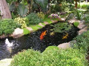 laguinho carpas jardim