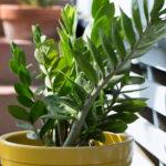 Plantas de interior que ficam bem na decoração da sala de jantar