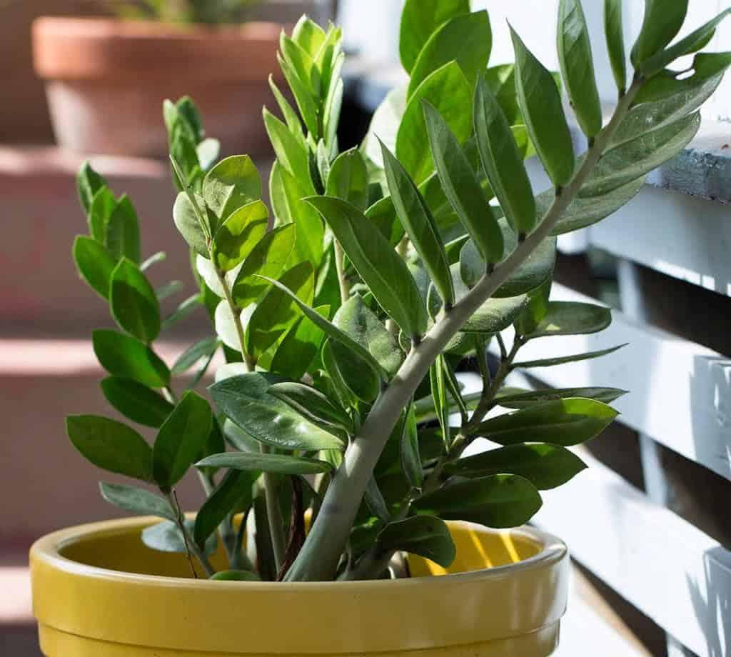 Plantas de interior - Plantas de interior para salon ...