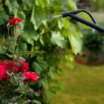 Venenos verdes ou pesticidas ecológicos para as pragas de jardins e hortas