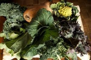 "Couve (Brassica oleracea) - ""Couve"" é um termo genérico para diversos"