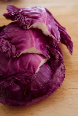 Repolho (Brassica oleracea)