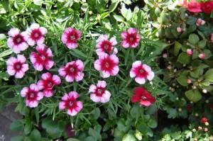 Canteiros de flores  para o verão!