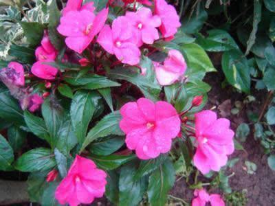 canteiro-flores