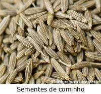 cominho semente