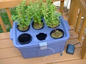 Cultivo hidropônico - Jardim caseiro