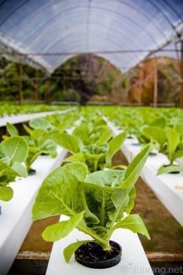 Como fazer cultivo hidropônico - Horta Hidropônica