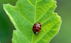 Venenos verdes para combater pragas de jardins e hortas