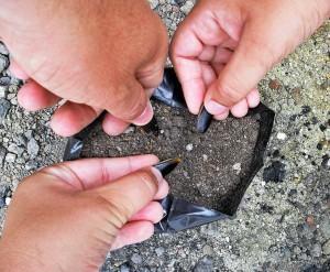 Sementeira coberta  -   mãos semeadoras